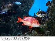 Тропические рыбы в морском аквариуме. Стоковое фото, фотограф Татьяна Белова / Фотобанк Лори