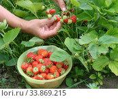 Купить «Strawberry», фото № 33869215, снято 4 июля 2010 г. (c) Александр Карпенко / Фотобанк Лори
