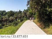 Купить «Fragment of arboretum with a path in Sochi, Russia», фото № 33877651, снято 5 июня 2018 г. (c) Володина Ольга / Фотобанк Лори