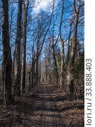 Купить «Old linden alley with high trunks on a spring day», фото № 33888403, снято 1 мая 2020 г. (c) Валерий Смирнов / Фотобанк Лори