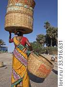 Купить «Korlai beach and its fishing activity with the women at work on the drying and sieving of the dried shrimps, then the portage with these enormous baskets. India 2019.», фото № 33916631, снято 19 марта 2019 г. (c) age Fotostock / Фотобанк Лори