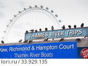 "LONDON - AUGUST 23, 2017: Pigeons sit on the ""Thames River Trips"" sign. Редакционное фото, фотограф Nataliia Zhekova / Фотобанк Лори"