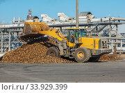 Купить «Front-end loader in action on the loading of sugar beet at a sugar factory», фото № 33929399, снято 9 октября 2015 г. (c) Nataliia Zhekova / Фотобанк Лори