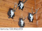 Купить «Jagd, Jagdtrophaee, Jagdtrophäe, Jäger, Jaeger, Geweih», фото № 33932019, снято 4 августа 2020 г. (c) age Fotostock / Фотобанк Лори