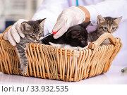 Купить «Doctor and assistant in vet clinic checking up kitten», фото № 33932535, снято 27 августа 2018 г. (c) Elnur / Фотобанк Лори