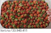 Купить «A woman's hands throw some strawberries on a tray with berries. Wet red ripe strawberry on a tray of steel with holes. Berries background. Slow motion video. Top view. Full HD video, 240fps, 1080p», видеоролик № 33940411, снято 5 августа 2020 г. (c) Ярослав Данильченко / Фотобанк Лори