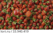 Купить «Red ripe juicy strawberry slow falls one by one on a tray with berries made of steel with holes. Berries background. Slow motion video. Top view. Full HD video, 240fps,1080p», видеоролик № 33940419, снято 5 августа 2020 г. (c) Ярослав Данильченко / Фотобанк Лори
