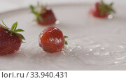 Купить «Close-up drops of water and ripe red strawberry fruit falls into a plate with splashes. A few berries lie on the white plate. Slow motion. Soft focus. Full HD video, 240fps,1080p.», видеоролик № 33940431, снято 2 июля 2020 г. (c) Ярослав Данильченко / Фотобанк Лори