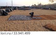 Женщина раскладывает рыбу для сушки. Рыбный рынок в Негомбо, Шри-Ланка. Редакционное видео, видеограф Виктор Карасев / Фотобанк Лори
