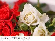 Купить «Bouquet of fresh red and white roses,», фото № 33960143, снято 14 февраля 2019 г. (c) Nataliia Zhekova / Фотобанк Лори