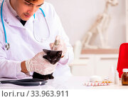 Купить «The vet doctor examining kittens in animal hospital», фото № 33963911, снято 6 июля 2020 г. (c) easy Fotostock / Фотобанк Лори