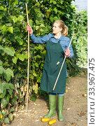 Купить «Young woman gardener with bamboo stick working with marrow seedlings», фото № 33967475, снято 3 октября 2018 г. (c) Яков Филимонов / Фотобанк Лори