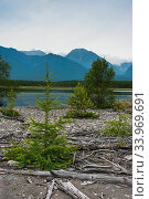 Trees growing on the shore of Lake Baikal, Siberia, Russia. July 2015. Стоковое фото, фотограф Olga Kamenskaya / Nature Picture Library / Фотобанк Лори