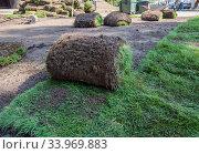 Купить «Рулонный газон в процессе его укладки в парке», фото № 33969883, снято 5 сентября 2019 г. (c) Вячеслав Палес / Фотобанк Лори