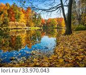 Купить «Осенние красные, желтые, зеленые деревья в парке Царицыно в Москве», фото № 33970043, снято 15 октября 2018 г. (c) Baturina Yuliya / Фотобанк Лори