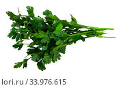 Купить «Fresh green parsley leaves», фото № 33976615, снято 12 июля 2020 г. (c) Яков Филимонов / Фотобанк Лори