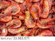 Lot of boiled-frozen wild shrimp with caviar cooked in sea water. Background of group small aquatic crustaceans. Prawn - Asian sea delicacy cuisine. Стоковое фото, фотограф А. А. Пирагис / Фотобанк Лори