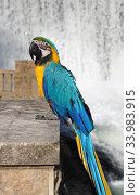 Купить «Попугай ара (Ara)», фото № 33983915, снято 18 сентября 2019 г. (c) EgleKa / Фотобанк Лори