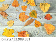 Купить «Yellow autumn leaves on a light old wooden background with empty space for text. the view from the top. flat lay», фото № 33989351, снято 6 июля 2020 г. (c) easy Fotostock / Фотобанк Лори