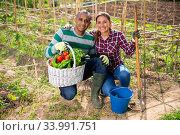 Cheerful couple of gardeners proud of harvest of vegetables. Стоковое фото, фотограф Яков Филимонов / Фотобанк Лори