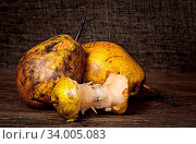 Two pears and stub on wooden table background sacking. Стоковое фото, фотограф Zoonar.com/Cipariss / easy Fotostock / Фотобанк Лори