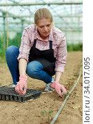 Купить «Young female horticulturist in apron and gloves planting green seedlings», фото № 34017095, снято 9 апреля 2019 г. (c) Яков Филимонов / Фотобанк Лори
