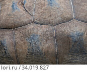 Carapace detail of Aldabra giant tortoise (Aldabrachelys gigantea) Astove Atoll, Aldabra island group, Seychelles. Стоковое фото, фотограф David Tipling / Nature Picture Library / Фотобанк Лори