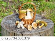 Различные съедобные грибы в корзинке и на старом пне. Стоковое фото, фотограф Елена Коромыслова / Фотобанк Лори
