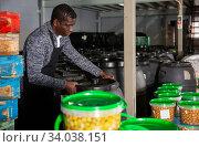 Worker stacking plastic barrels of pickled olives. Стоковое фото, фотограф Яков Филимонов / Фотобанк Лори