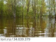 Купить «Grove flooded during spring flood», фото № 34039379, снято 15 мая 2020 г. (c) Евгений Харитонов / Фотобанк Лори