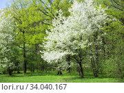 Spring time in a park. Стоковое фото, фотограф Фрибус Екатерина / Фотобанк Лори