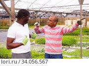 African and Latino men garden workers berating. Стоковое фото, фотограф Яков Филимонов / Фотобанк Лори