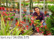 Купить «Female horticulturist working with flowers red orchids in pots», фото № 34056575, снято 7 июля 2020 г. (c) Яков Филимонов / Фотобанк Лори