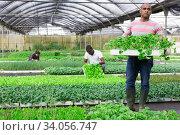 Latino man checking seedlings in garden center. Стоковое фото, фотограф Яков Филимонов / Фотобанк Лори