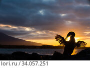 Flightless cormorant (Phalacrocorax harrisi) silhouetted at sunset, Punta Espinosa, Fernandina Island, Galapagos. Стоковое фото, фотограф Tui De Roy / Nature Picture Library / Фотобанк Лори