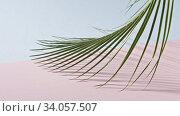 Купить «Smooth slow movement of a branch of an green tropical palm tree with long leaves touching a duotone pink blue background. Shadows from branch. Full HD video, 240fps, 1080p.», видеоролик № 34057507, снято 4 июля 2020 г. (c) Ярослав Данильченко / Фотобанк Лори