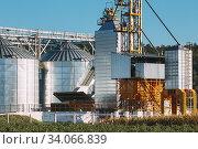 Modern Granary, Grain-drying Complex, Commercial Grain Or Seed Silos In Sunny Summer Rural Landscape. Corn Dryer Silos, Inland Grain Terminal, Grain Elevators Standing In A Field. Стоковое фото, фотограф Ryhor Bruyeu / easy Fotostock / Фотобанк Лори