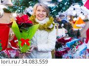 Adult woman is choosing red Christmas bouqet for present in the market. Стоковое фото, фотограф Яков Филимонов / Фотобанк Лори