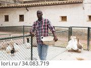Купить «Farm worker with bird feed standing near enclosure with gooses», фото № 34083719, снято 6 августа 2019 г. (c) Яков Филимонов / Фотобанк Лори