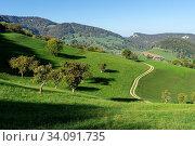 Im Solothurner Jura (Schwarzbubenland) bei Grindel, mit Kirschbäumen, ganz hinten die Roti Flue. Стоковое фото, фотограф Fredy Joss / age Fotostock / Фотобанк Лори
