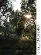 Купить «Рассвет сквозь деревья», фото № 34098463, снято 24 июня 2020 г. (c) Дмитрий Неумоин / Фотобанк Лори