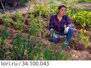 Купить «Peruvian woman sitting near greens and vegetables seedlings», фото № 34100043, снято 16 июля 2020 г. (c) Яков Филимонов / Фотобанк Лори