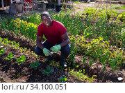 Купить «Successful african american male gardener with green onion», фото № 34100051, снято 9 июля 2020 г. (c) Яков Филимонов / Фотобанк Лори