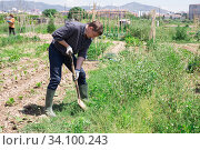 Купить «Professional horticulturist with garden shovel working at land», фото № 34100243, снято 18 мая 2020 г. (c) Яков Филимонов / Фотобанк Лори