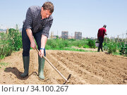 Купить «Professional horticulturist with garden shovel working at land», фото № 34100267, снято 18 мая 2020 г. (c) Яков Филимонов / Фотобанк Лори