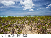 Купить «Mangrove beds on the West side of Cat Island, Bahamas.», фото № 34101423, снято 4 августа 2020 г. (c) Nature Picture Library / Фотобанк Лори