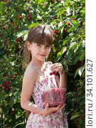 Девочка собирает плоды вишни с дерева. Стоковое фото, фотограф WalDeMarus / Фотобанк Лори