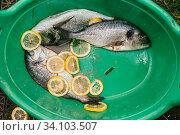 Fresh and raw fish with lemon and parsley on the grid Barbeque in the garden in summer ready and wait for the rost. Selective focus macro shot with shallow DOF. Стоковое фото, фотограф Zoonar.com/Sergey Krotov / age Fotostock / Фотобанк Лори