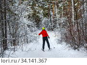 Лыжница в красной куртке на лыжне в заснеженном лесу. Западная Сибирь, Россия. Стоковое фото, фотограф Евгений Мухортов / Фотобанк Лори