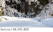 Тропинка через сугробы в заснеженном лесу. Западная Сибирь, Россия. Стоковое фото, фотограф Евгений Мухортов / Фотобанк Лори